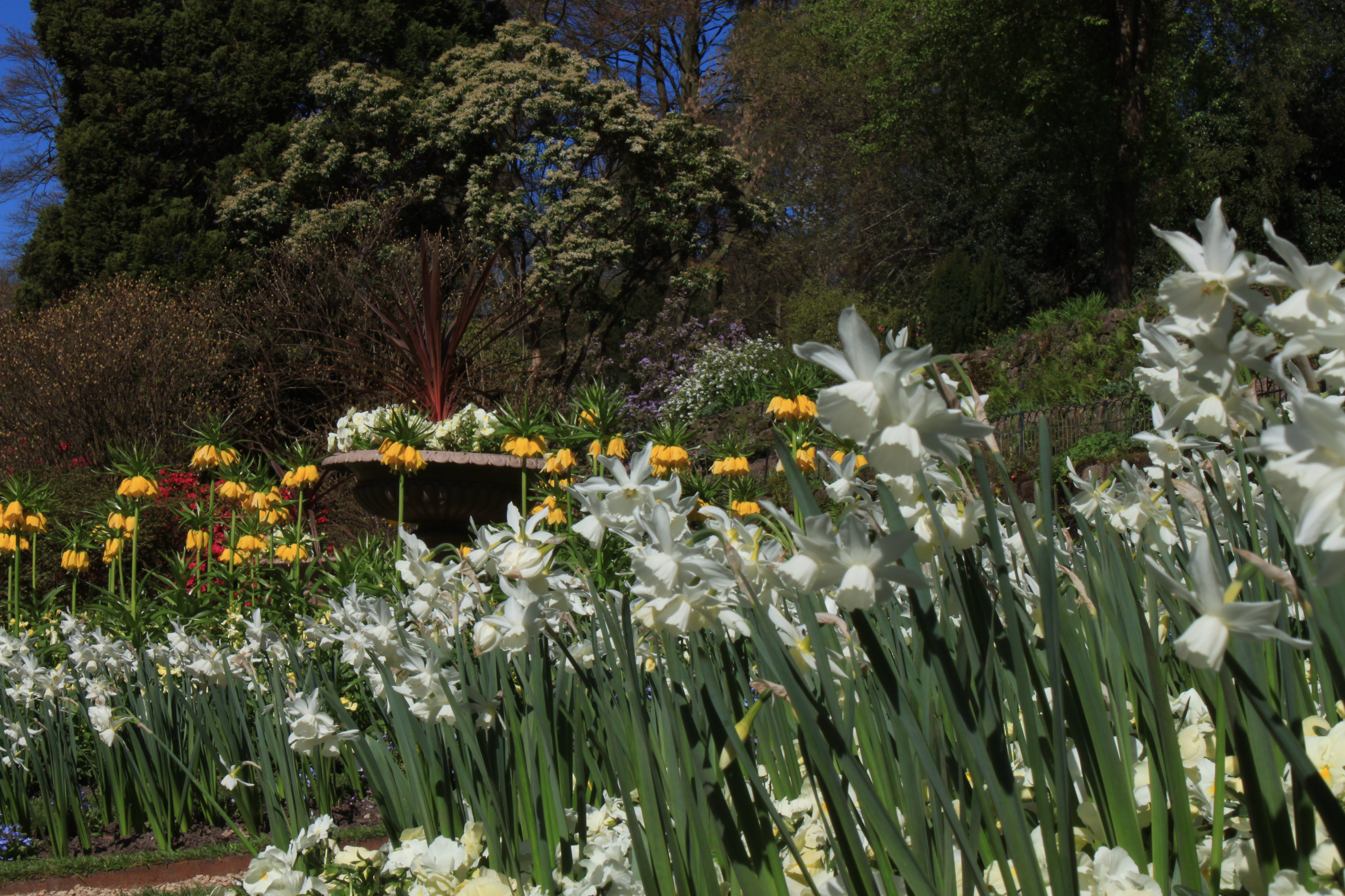 New Life In Quarry Bank Gardens Quarry Bank Revealed